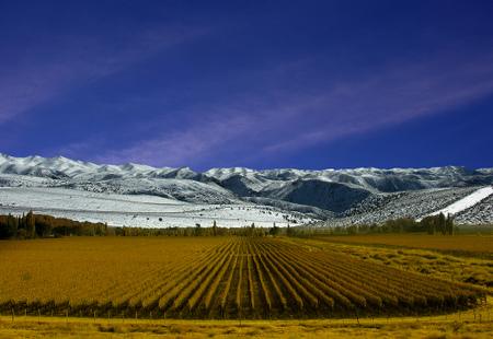 Vingård i Mendoza