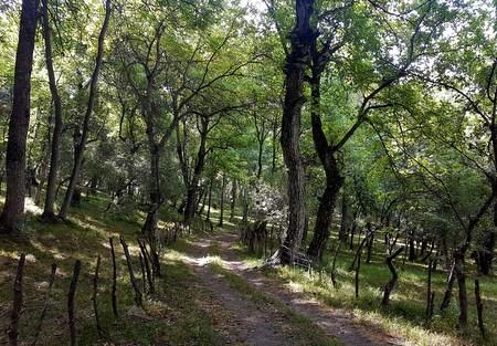 Valnøttskogen