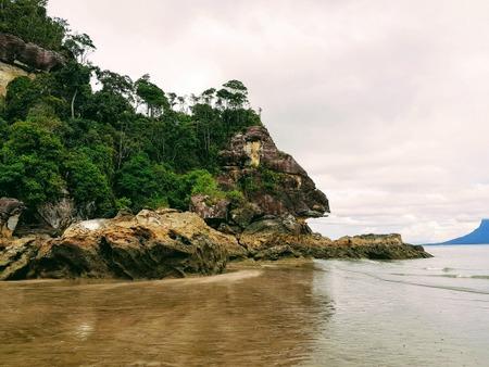 Jungel og strand