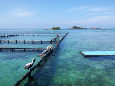 Islas de Roasrio