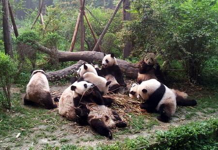 Bambus er snadder