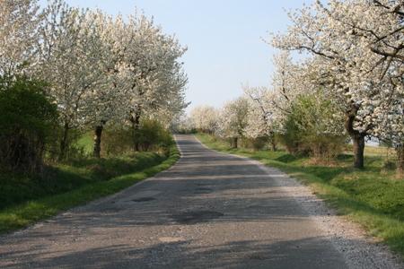 Blomster på trær
