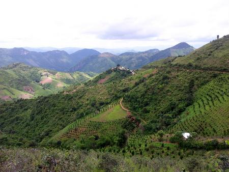 Grønnkledde fjell