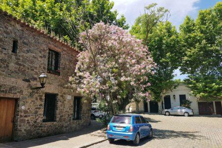 Blomster og trær